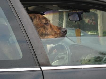 traffic on lake - doggie