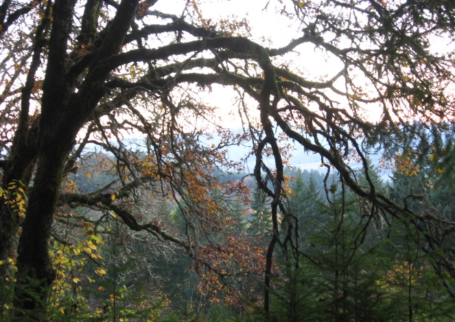 forest-grove-1