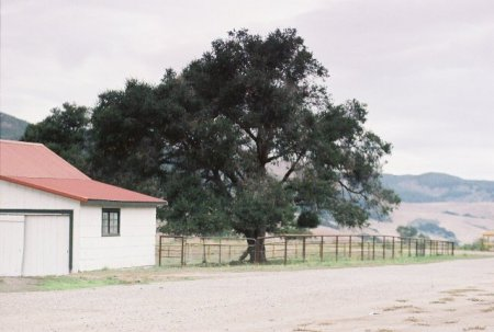 rancho-san-j-lone-tree