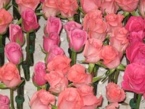 rb-09-prep-peach-pink-roses