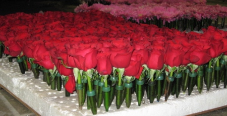 rb-09-prep-red-roses-standing