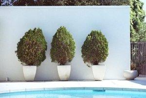 3-bushes